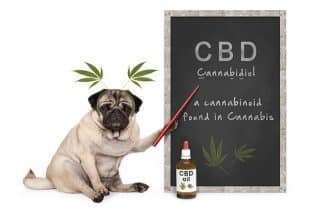 CBD benefits for animals